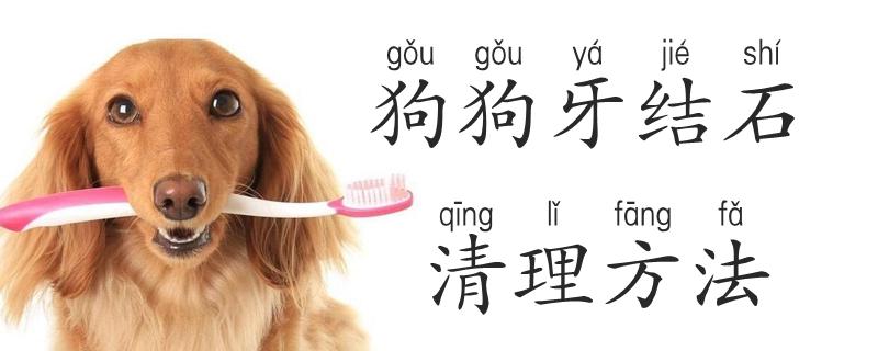 狗狗牙结石清理方法是什么