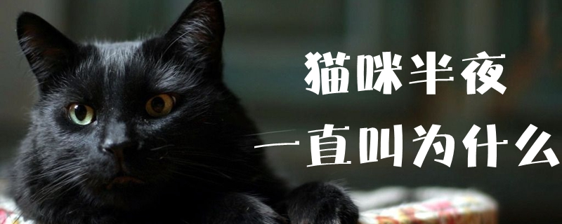猫咪半夜一直叫为什么