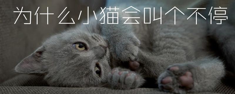 为什么小猫会叫个不停