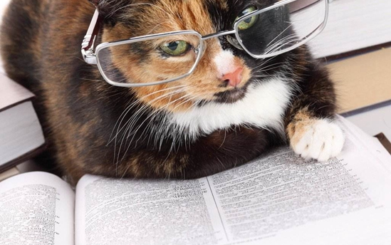 猫咪异位性皮炎怎么治 猫咪异位性皮炎治疗方法