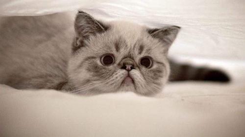 猫咪得了忧郁症怎么办