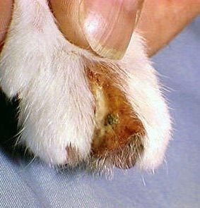 猫猫皮肤病怎么治疗11