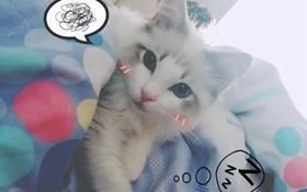 如何训练布偶猫用猫抓板 猫抓板妙用视频