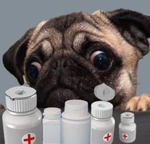 小狗拉肚子吃什么药