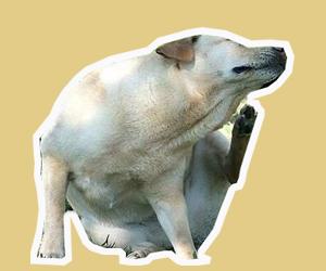 狗身上的吸血虫怎么处理