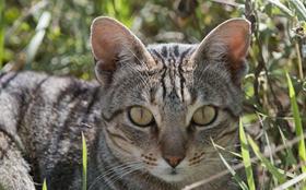 肯尼亚猫便秘如何治疗 肯尼亚猫便秘治疗方法