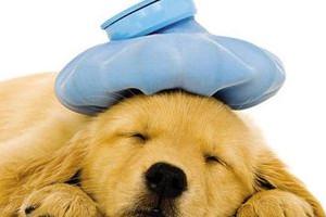 犬瘟症状有哪些