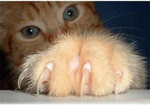 猫咪剪指甲流血怎么办 猫咪剪指甲流血处理方法