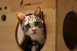 怎么给猫猫量体温