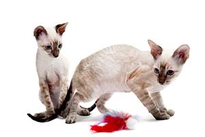 小猫受到惊吓会怎么样