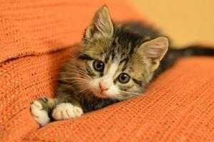 如何帮助猫咪生产