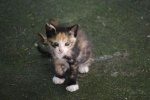 小猫生产之前的征兆有哪些