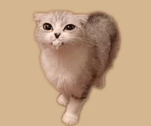 猫吐白沫怎么办