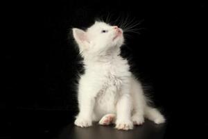 怎样让小猫学会用猫砂