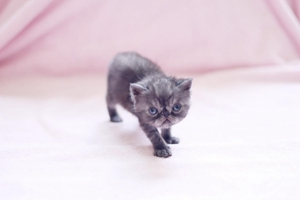 如何给小猫断奶